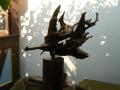 poisson (1)